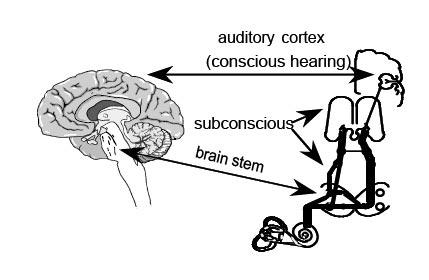 Retraining Hearing